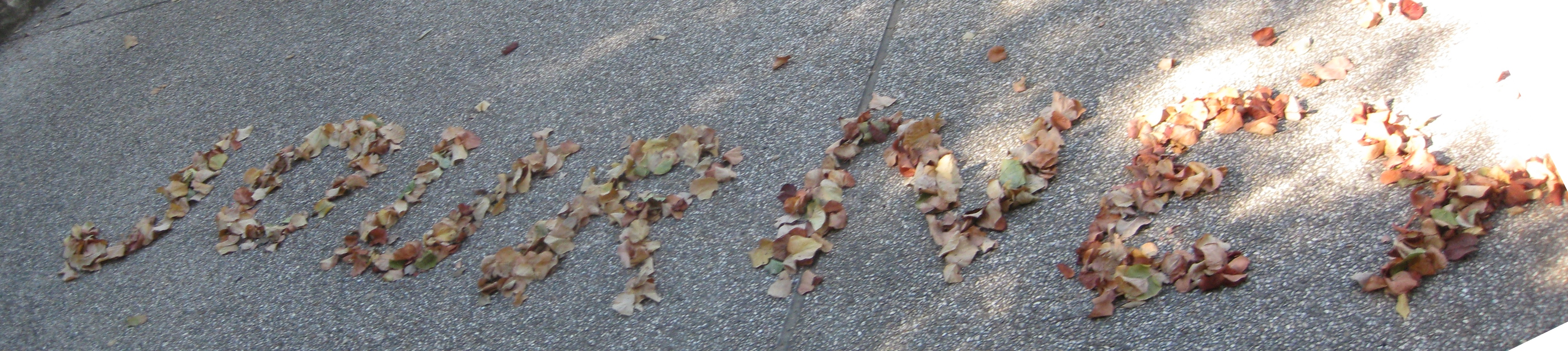 Leaves--Journey