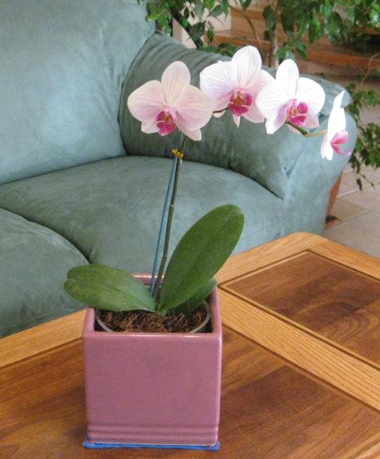 Post 97-flower arrangements3