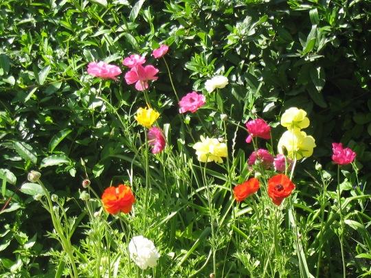 Post 97-wild flowers