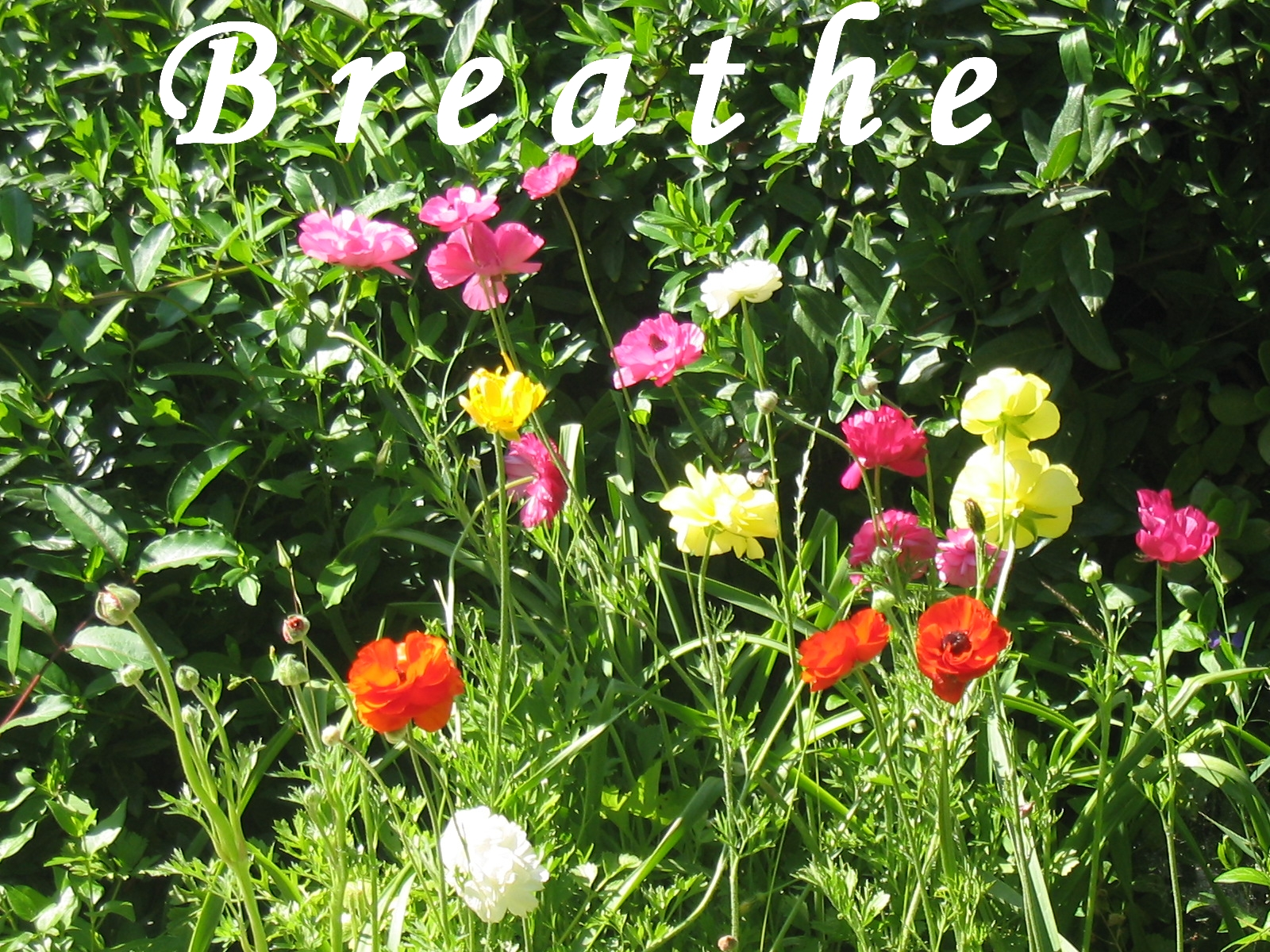Breathing Energy Guidance Complete Inhalation And Exhalation Diagram Inhale Exhale The Rhythm Of Motivator Healing