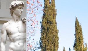 David statue-trees