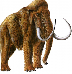 woolly-mammoth-293x300